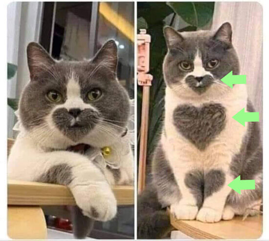 Cat with Three Hearts In Fur