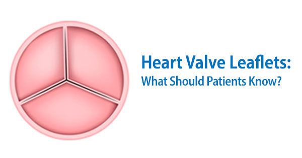 Heart Valve Leaflets