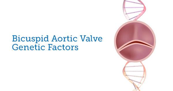Genetics of Bicuspid Aortic Valves